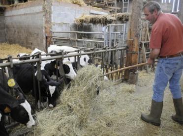 Komitet Regionów: potrzebny jest program redukcji produkcji mleka