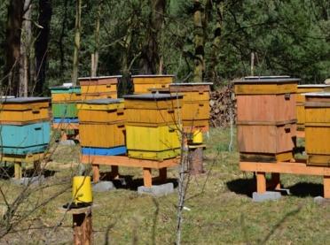 Zginęło prawie 2 mln pszczół - sprawę wyjaśnia policja