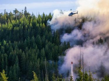 Nagroda za wskazanie podpalaczy lasu