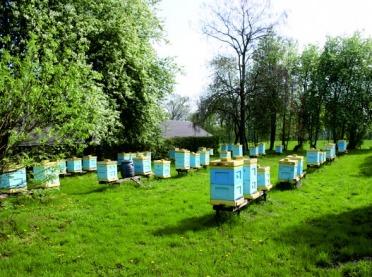 Czy RHD jest dla pszczelarzy?