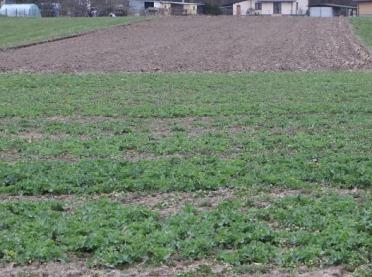 To będzie trudny rok dla roślin - jaka sytuacja na polach?