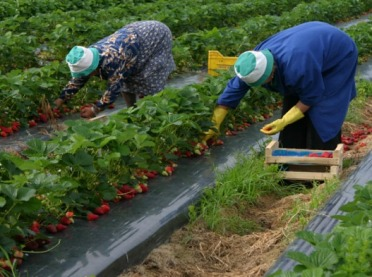 Przyjazd pracowników sezonowych do Polski - na jakich zasadach?