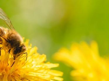 """Miodowy poradnik - """"Kochajmy pszczoły, kochajmy miód"""""""