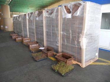 PIORiN o eksporcie towarów pochodzenia roślinnego w 2019 r.