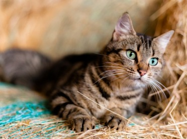 Koronawirus u zwierząt - jaka procedura wykrywania?