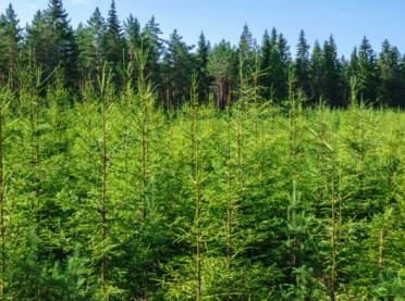 Wsparcie na zalesianie - trwa nabór wniosków
