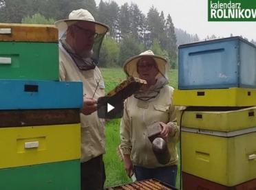 """""""Z kamerą w pasiece"""" Przegląd pszczół i kilka ciekawostek prosto z ula"""