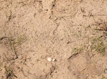 126 tysięcy rolników czeka na suszowe za 2019 rok