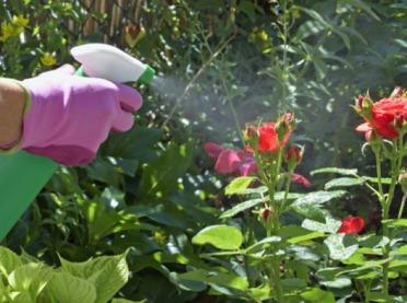 Jak skutecznie zwalczać mszyce?