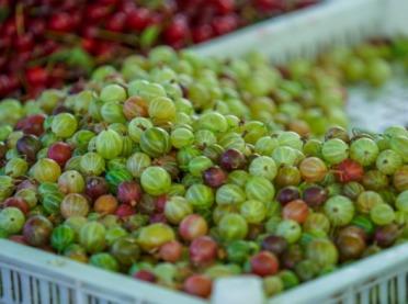 Drastyczny spadek cen na rynku owoców miękkich - zmowa cenowa?