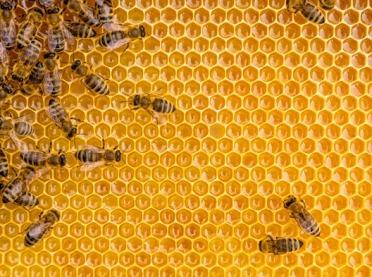 Zginęło 50 milionów pszczół!