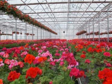 Sektor kwiatów i roślin żywych o skutkach kryzysu COVID-19