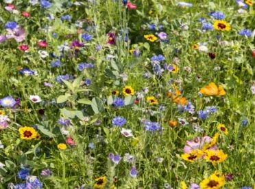 Dlaczego warto zakładać łąki kwietne?