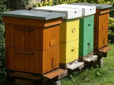 42 mln zł rocznie na nowy program pszczelarski