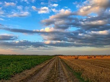 KOWR uruchomił dopłaty do ubezpieczenia upraw rolnych i zwierząt gospodarskich w 2020 r.