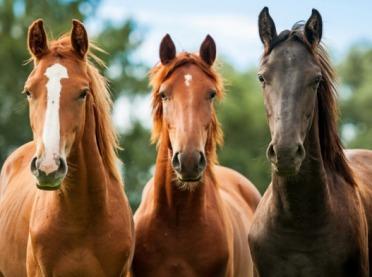 Hodowcy koni zostali bez pomocy?