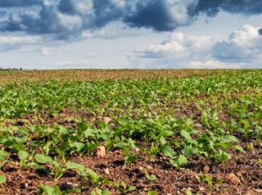 Nawożenie RSM zbóż ozimych i rzepaku ozimego