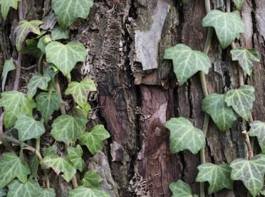 Rośliny zimozielone - jakie wybrać do ogrodu?