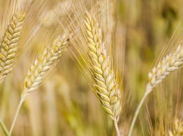 GK GPW rozszerza ofertę produktową na giełdowym rynku rolnym