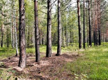 Prywatny las z dotacją z PROW