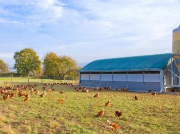 Czy ustawa odorowa rozwiąże problemy mieszkańców wsi?