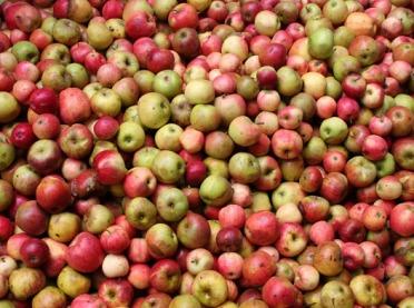 Wzrost produkcji jabłek w Polsce, niskie plony w Chinach i USA