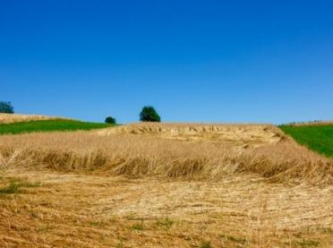 Rolnicy skarżą się na ubezpieczycieli. Rzecznik Finansowy interweniuje