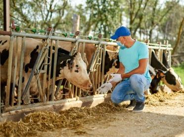 WIR sprawdził: Czy rolnik na kwarantannie może pracować?