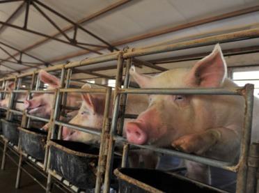 Jest decyzja w sprawie stawki VAT na nasienie zwierząt