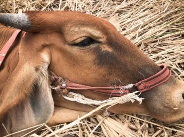 Usypianie chorych zwierząt - o humanitarnym skracaniu cierpienia