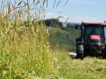 Koszenie nieużytków i łąk należy przesunąć na wrzesień?