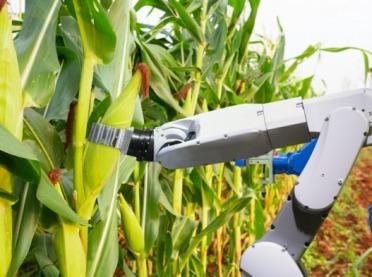 NCBR: Polski robot na polu kukurydzy