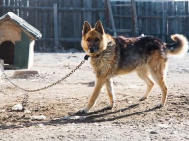 Czy będą kary za trzymanie psa na łańcuchu?