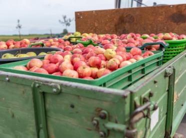Ukradli ponad 5 ton jabłek