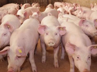 """Ilu rolników wnioskowało o wsparcie na """"Dobrostan zwierząt""""?"""