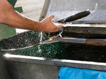 Łagodzenie skutków epidemii COVID-19 w sektorze akwakultury - wkrótce nabór wniosków