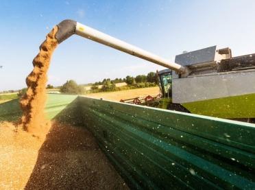 Zmiany w hodowli załamią rynek zbóż?