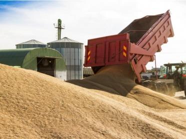 Zbiory zbóż większe niż rok temu