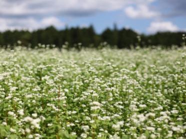 Koszty i opłacalność uprawy trzeciej rośliny w płodozmianie