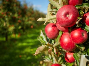 Światowy Dzień Owoców i Warzyw – czy pamiętamy o nich na co dzień?