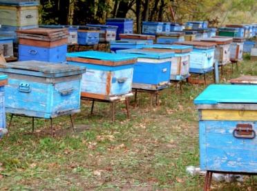 RHD czy sprzedaż bezpośrednia - trudny wybór pszczelarzy
