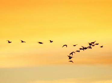 Grypa ptaków - czy będą kłopoty handlowe?