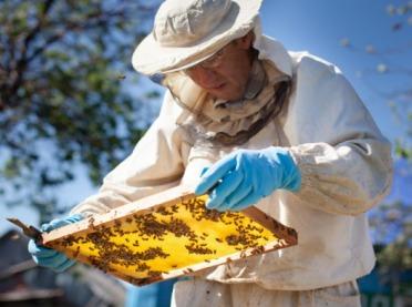 Zły rok dla europejskich pszczelarzy