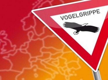 Dwa typy wirusa grypy ptaków w Niemczech
